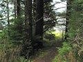 Forest Trail above Manzanita